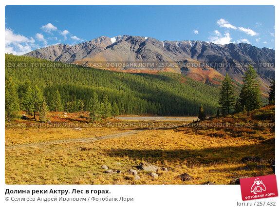 Долина реки Актру. Лес в горах., фото № 257432, снято 25 августа 2007 г. (c) Селигеев Андрей Иванович / Фотобанк Лори