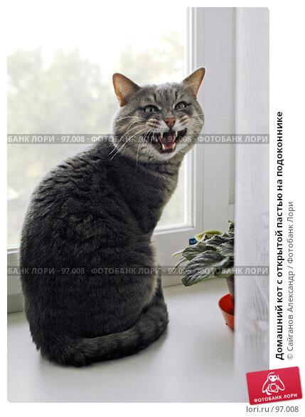 Купить «Домашний кот с открытой пастью на подоконнике», эксклюзивное фото № 97008, снято 18 сентября 2007 г. (c) Сайганов Александр / Фотобанк Лори