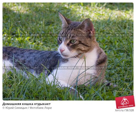 Домашняя кошка отдыхает, фото № 58528, снято 3 октября 2004 г. (c) Юрий Синицын / Фотобанк Лори
