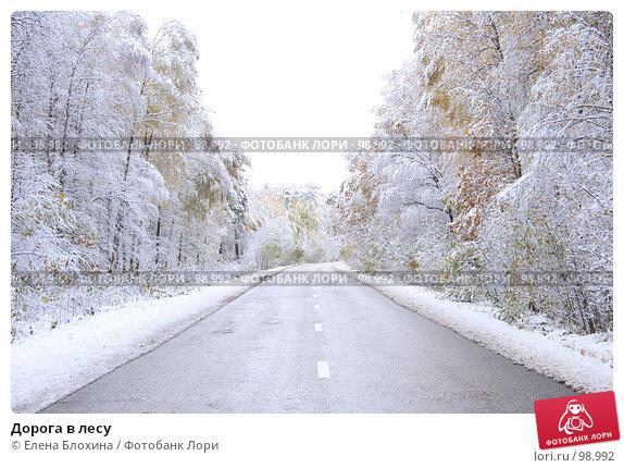 Дорога в лесу, фото № 98992, снято 16 октября 2007 г. (c) Елена Блохина / Фотобанк Лори