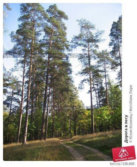 Купить «Дорога в лесу», фото № 236600, снято 23 сентября 2007 г. (c) Юлия Козинец / Фотобанк Лори
