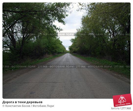 Купить «Дорога в тени деревьев», фото № 277968, снято 24 апреля 2018 г. (c) Константин Босов / Фотобанк Лори