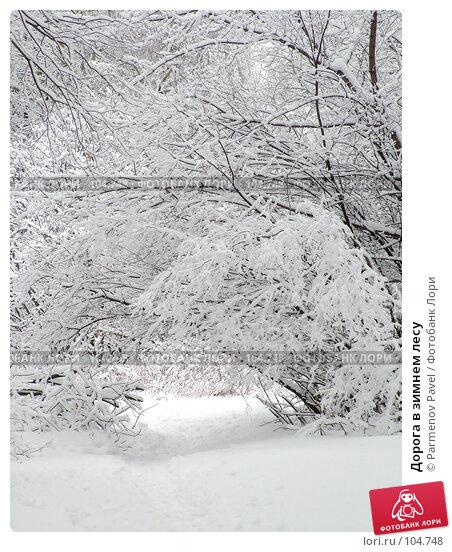 Купить «Дорога в зимнем лесу», фото № 104748, снято 25 ноября 2017 г. (c) Parmenov Pavel / Фотобанк Лори