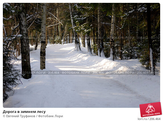 Дорога в зимнем лесу, фото № 206464, снято 21 февраля 2008 г. (c) Евгений Труфанов / Фотобанк Лори