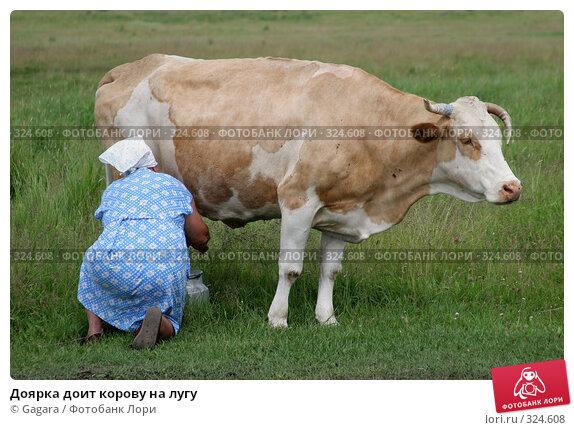 Доярка доит корову на лугу, фото № 324608, снято 8 октября 2007 г. (c) Gagara / Фотобанк Лори