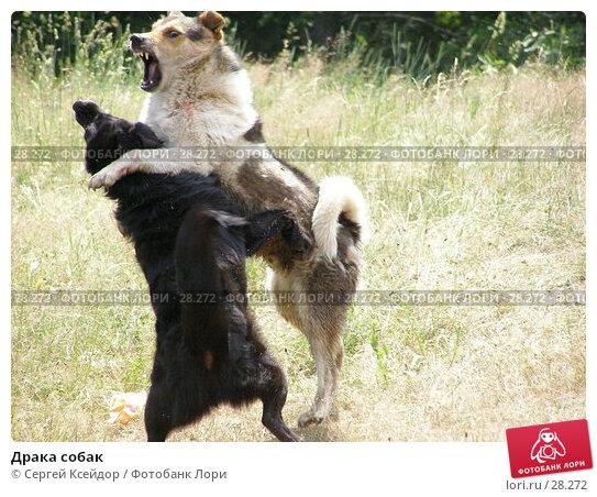 Драка собак, фото № 28272, снято 24 июня 2006 г. (c) Сергей Ксейдор / Фотобанк Лори