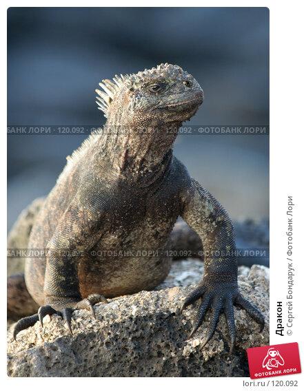 Купить «Дракон», фото № 120092, снято 1 февраля 2007 г. (c) Сергей Бондарук / Фотобанк Лори
