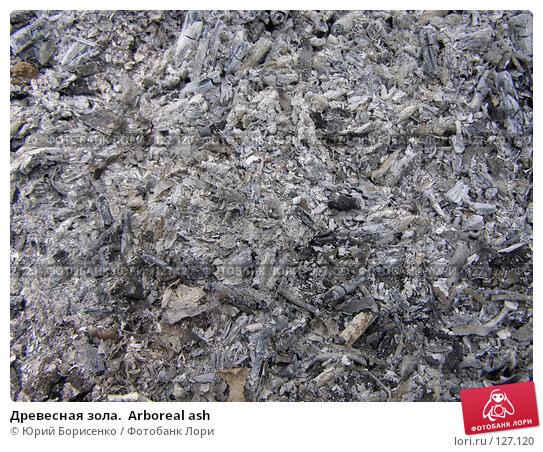 Древесная зола.  Arboreal ash, фото № 127120, снято 9 июня 2007 г. (c) Юрий Борисенко / Фотобанк Лори