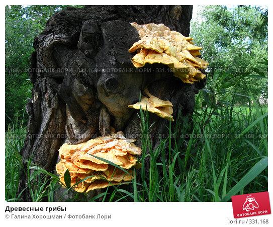 Древесные грибы, фото № 331168, снято 7 июня 2008 г. (c) Галина Хорошман / Фотобанк Лори