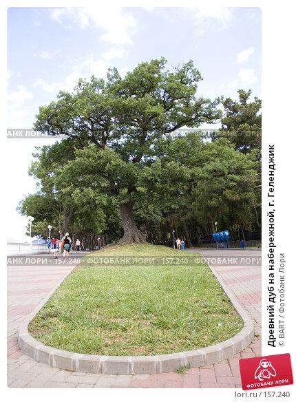 Древний дуб на набережной, г. Геленджик, фото № 157240, снято 25 июля 2017 г. (c) BART / Фотобанк Лори