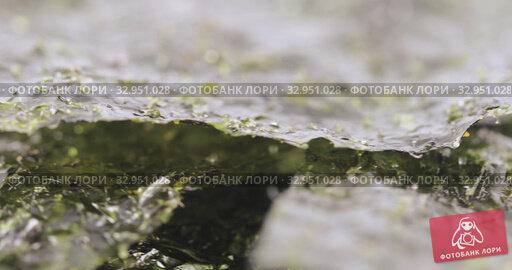 Dried leaf of sea cabbage. Стоковое видео, видеограф Потийко Сергей / Фотобанк Лори