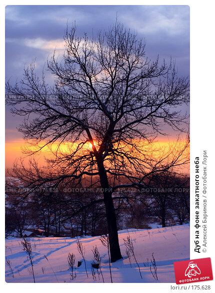 Дуб на фоне закатного неба, фото № 175628, снято 7 января 2008 г. (c) Алексей Баринов / Фотобанк Лори