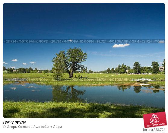 Дуб у пруда, фото № 28724, снято 18 июня 2006 г. (c) Игорь Соколов / Фотобанк Лори