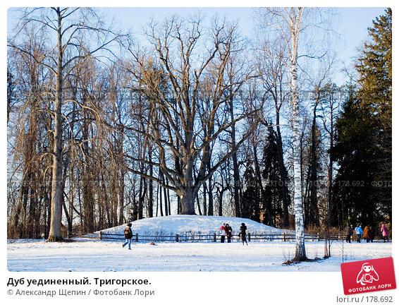 Дуб уединенный. Тригорское., эксклюзивное фото № 178692, снято 5 января 2008 г. (c) Александр Щепин / Фотобанк Лори