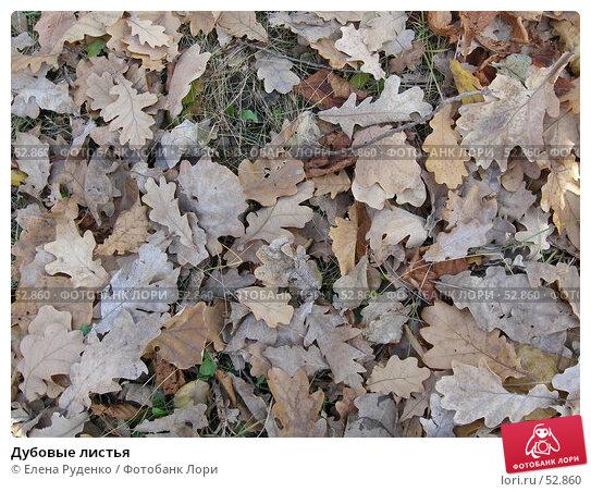 Дубовые листья, фото № 52860, снято 7 ноября 2005 г. (c) Елена Руденко / Фотобанк Лори