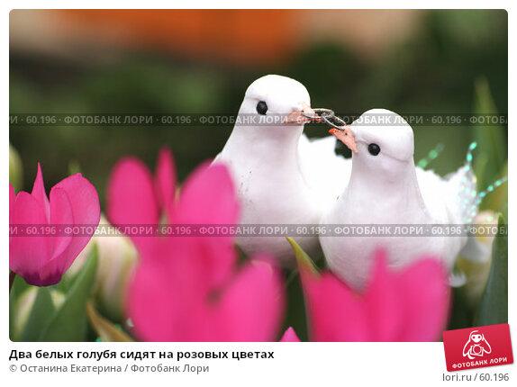 Два белых голубя сидят на розовых цветах, фото № 60196, снято 19 февраля 2007 г. (c) Останина Екатерина / Фотобанк Лори