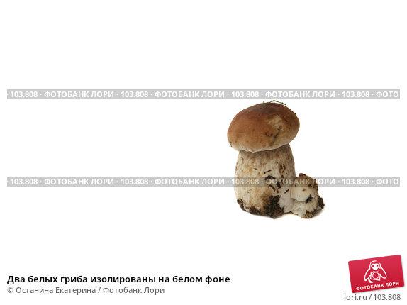 Два белых гриба изолированы на белом фоне, фото № 103808, снято 24 мая 2017 г. (c) Останина Екатерина / Фотобанк Лори