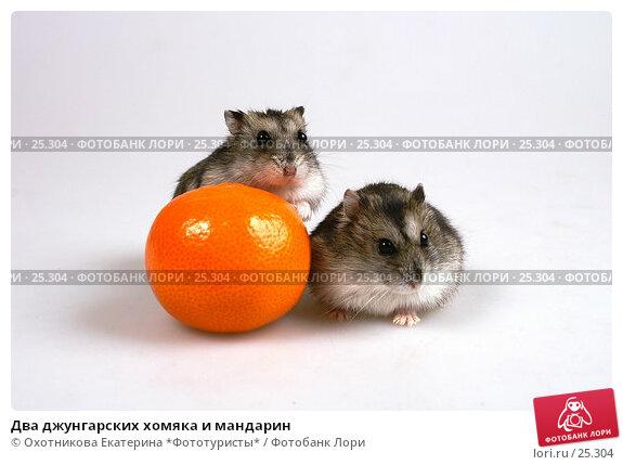 Два джунгарских хомяка и мандарин, эксклюзивное фото № 25304, снято 18 марта 2007 г. (c) Охотникова Екатерина *Фототуристы* / Фотобанк Лори