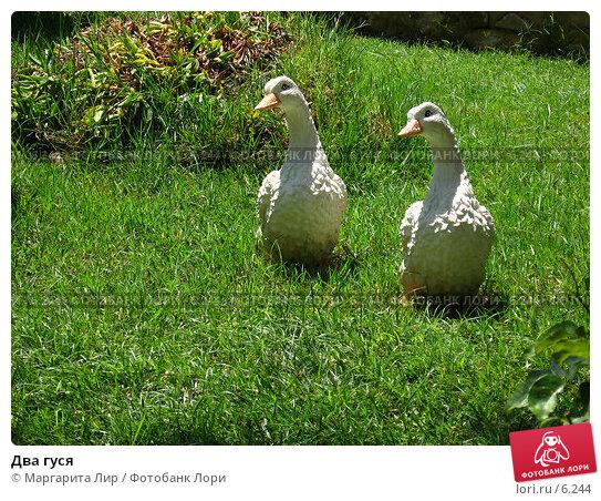 Два гуся, фото № 6244, снято 12 июля 2006 г. (c) Маргарита Лир / Фотобанк Лори