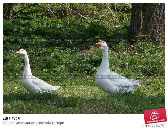 Два гуся, фото № 270780, снято 1 мая 2008 г. (c) Яков Филимонов / Фотобанк Лори