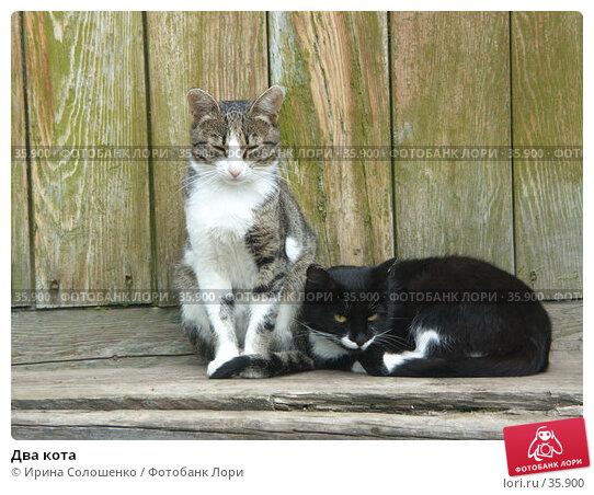 Два кота, фото № 35900, снято 12 августа 2006 г. (c) Ирина Солошенко / Фотобанк Лори