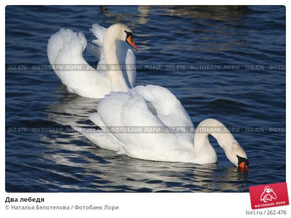 Два лебедя, фото № 262476, снято 29 марта 2008 г. (c) Наталья Белотелова / Фотобанк Лори