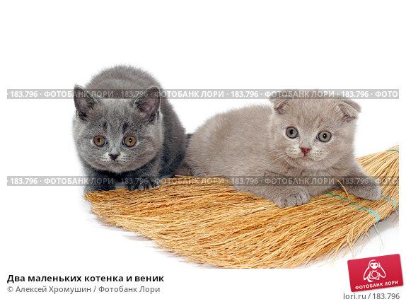 Два маленьких котенка и веник, фото № 183796, снято 27 октября 2007 г. (c) Алексей Хромушин / Фотобанк Лори