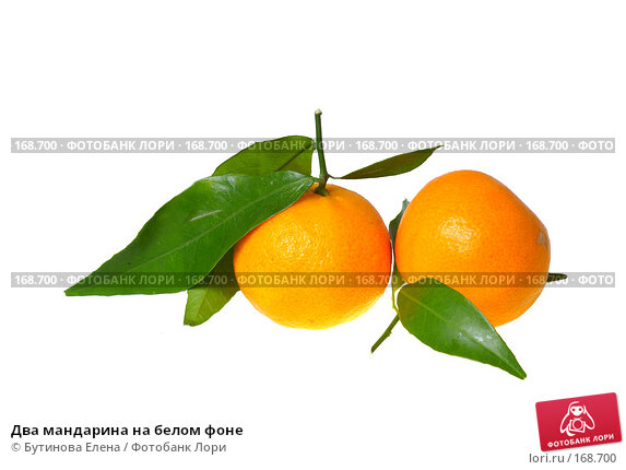 Купить «Два мандарина на белом фоне», фото № 168700, снято 27 декабря 2007 г. (c) Бутинова Елена / Фотобанк Лори
