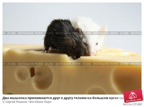 Купить «Два мышонка прижимаются друг к другу телами на большом куске сыра», фото № 27692, снято 18 марта 2007 г. (c) Сергей Лешков / Фотобанк Лори