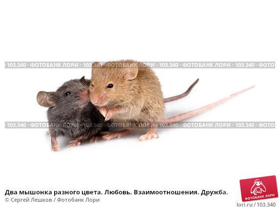 Два мышонка разного цвета. Любовь. Взаимоотношения. Дружба., фото № 103340, снято 24 октября 2016 г. (c) Сергей Лешков / Фотобанк Лори