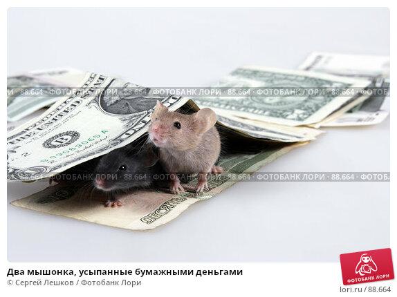 Два мышонка, усыпанные бумажными деньгами, фото № 88664, снято 24 июля 2017 г. (c) Сергей Лешков / Фотобанк Лори
