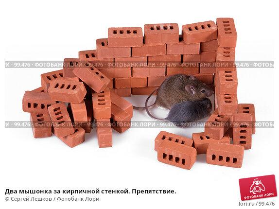 Два мышонка за кирпичной стенкой. Препятствие., фото № 99476, снято 29 марта 2017 г. (c) Сергей Лешков / Фотобанк Лори
