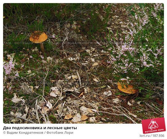 Два подосиновика и лесные цветы, фото № 187936, снято 26 марта 2017 г. (c) Вадим Кондратенков / Фотобанк Лори