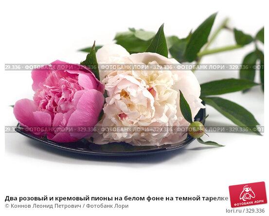 Два розовый и кремовый пионы на белом фоне на темной тарелке лежат, фото № 329336, снято 20 июня 2008 г. (c) Коннов Леонид Петрович / Фотобанк Лори
