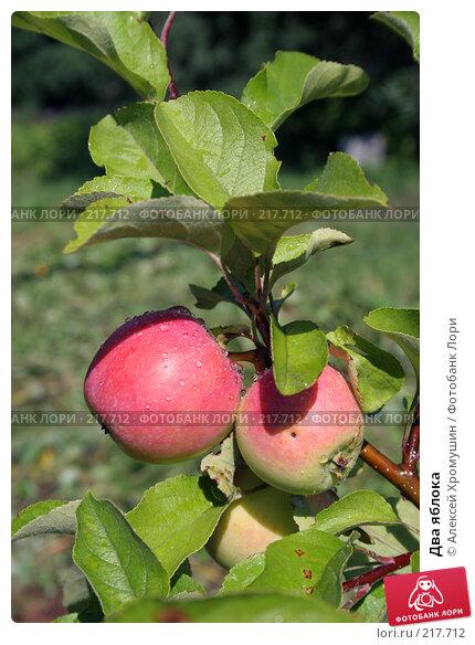 Два яблока, фото № 217712, снято 29 июля 2007 г. (c) Алексей Хромушин / Фотобанк Лори