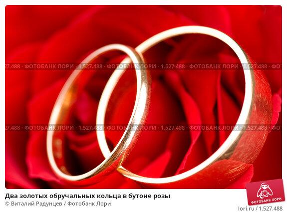 Два золотых обручальных кольца в бутоне розы, фото № 1527488, снято 4 февраля 2010 г. (c) Виталий Радунцев / Фотобанк Лори