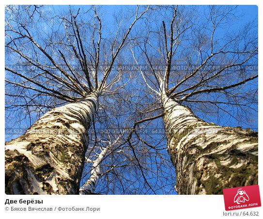 Две берёзы, фото № 64632, снято 8 апреля 2007 г. (c) Бяков Вячеслав / Фотобанк Лори