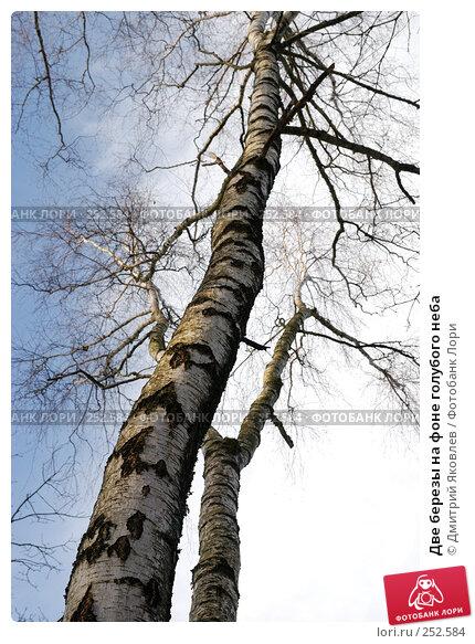 Две березы на фоне голубого неба, фото № 252584, снято 2 марта 2008 г. (c) Дмитрий Яковлев / Фотобанк Лори