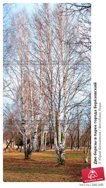 Купить «Две березы в парке города Берёзовский», фото № 266040, снято 9 апреля 2008 г. (c) Юрий Бельмесов / Фотобанк Лори