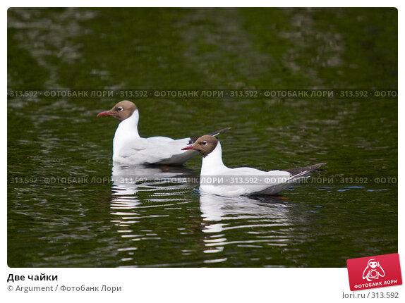 Две чайки, фото № 313592, снято 1 июня 2008 г. (c) Argument / Фотобанк Лори