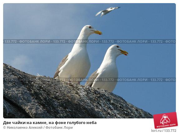 Две чайки на камне, на фоне голубого неба, фото № 133772, снято 16 июля 2006 г. (c) Николаенко Алексей / Фотобанк Лори