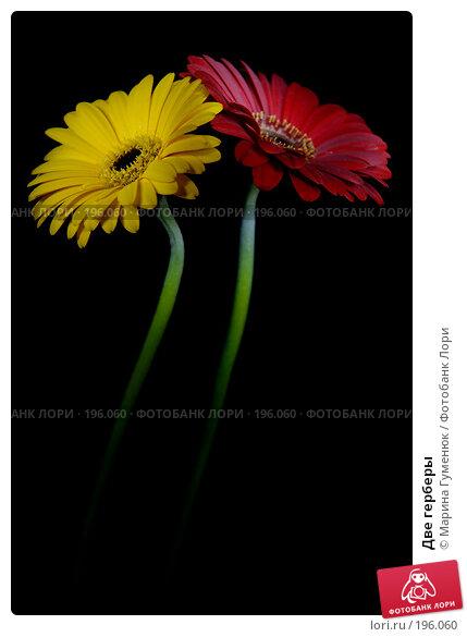 Две герберы, фото № 196060, снято 25 ноября 2007 г. (c) Марина Гуменюк / Фотобанк Лори