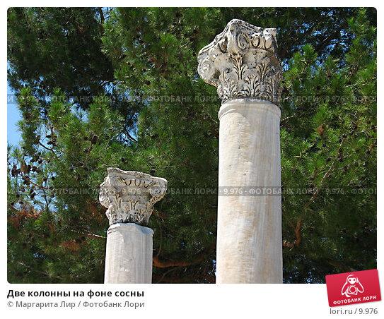 Две колонны на фоне сосны, фото № 9976, снято 9 июля 2006 г. (c) Маргарита Лир / Фотобанк Лори