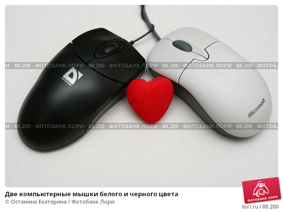 Две компьютерные мышки белого и черного цвета, фото № 88200, снято 15 декабря 2006 г. (c) Останина Екатерина / Фотобанк Лори
