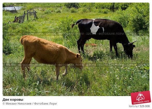 Две коровы, фото № 329008, снято 19 июня 2008 г. (c) Михаил Николаев / Фотобанк Лори
