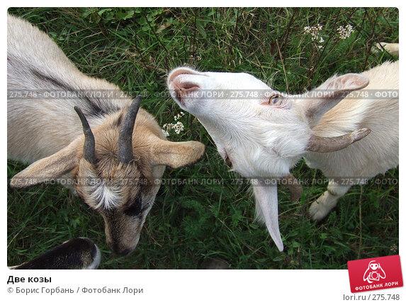 Две козы, фото № 275748, снято 9 февраля 2005 г. (c) Борис Горбань / Фотобанк Лори