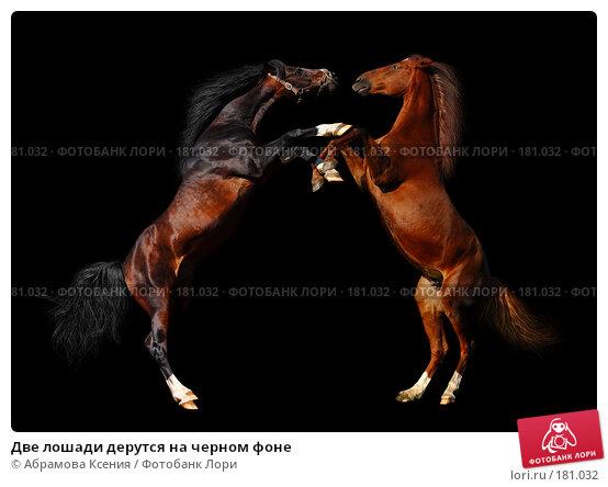 Купить «Две лошади дерутся на черном фоне», фото № 181032, снято 8 мая 2005 г. (c) Абрамова Ксения / Фотобанк Лори