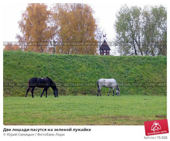 Две лошади пасутся на зеленой лужайке, фото № 15928, снято 22 октября 2004 г. (c) Юрий Синицын / Фотобанк Лори