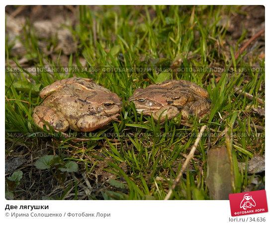Купить «Две лягушки», фото № 34636, снято 14 мая 2006 г. (c) Ирина Солошенко / Фотобанк Лори