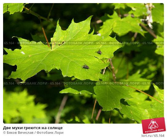 Две мухи греются на солнце, фото № 65164, снято 30 июня 2007 г. (c) Бяков Вячеслав / Фотобанк Лори
